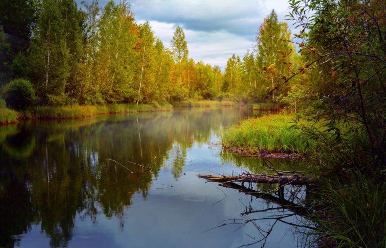 Curso de Experto en Gestión para la Protección Medioambiental