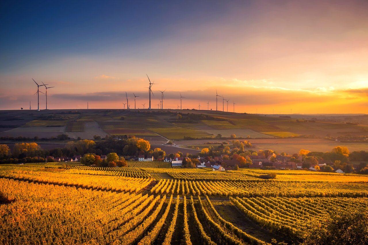 imagen de una plantación rural
